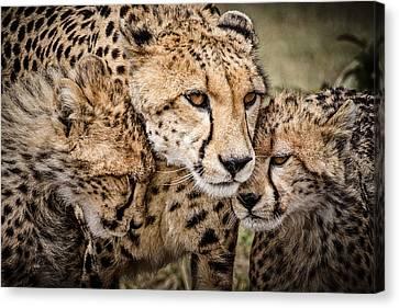 Cheetah Family Portrait Canvas Print by Mike Gaudaur