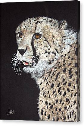 Cheetah Glory Canvas Print by John Hebb