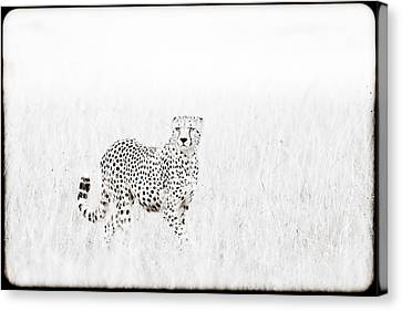 Cheetah In The Grass Canvas Print by Mike Gaudaur