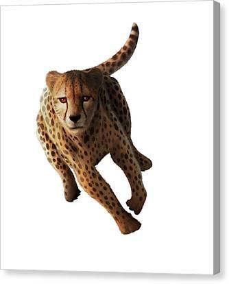 Cheetah Canvas Print by Mark Garlick