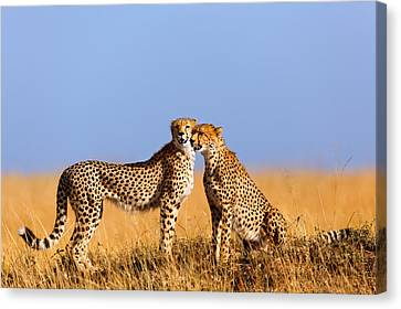 Cheetah Mother With Daughter Masai Mara Canvas Print by Maggy Meyer