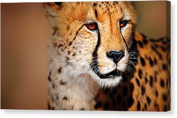 Cheetah Portrait Canvas Print