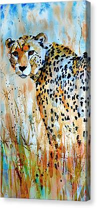 Cheetah Canvas Print by Steven Ponsford