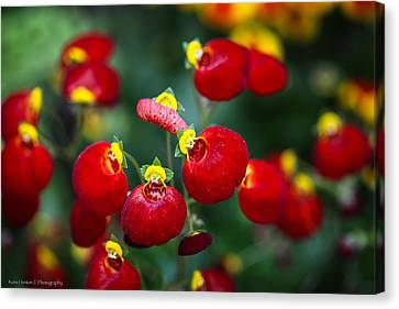 Canvas Print featuring the photograph Chelsea Red by Ross Henton
