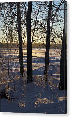 Chena River Trees Canvas Print by Cathy Mahnke