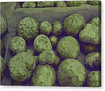 Cherimoya Canvas Print by David Pantuso