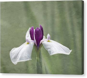 Cherished Canvas Print by Kim Hojnacki