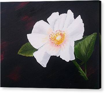 Cherokee Rose Canvas Print by Valorie Cross