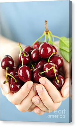 Cherries Canvas Print by Elena Elisseeva