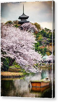 Cherry Blossom 2014 Canvas Print by John Swartz