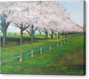 Canvas Print featuring the painting Cherry Blossom Christchurch by Jane  See