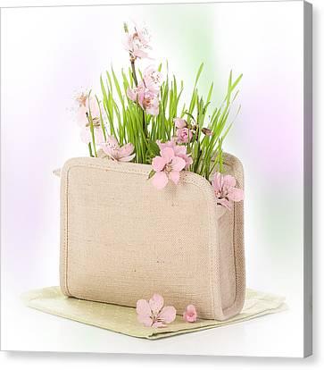 Cherry Blossom Canvas Print by Amanda Elwell