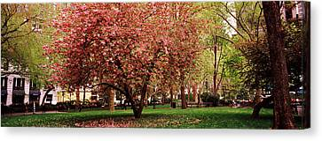 Cherry Blossom In A Park, Madison Canvas Print by Panoramic Images
