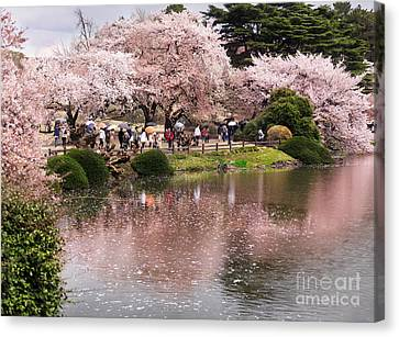 Cherry Blossom In Park In Tokyo Canvas Print by Oleksiy Maksymenko