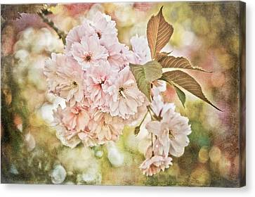 Cherry Blossom Canvas Print by Loriental Photography