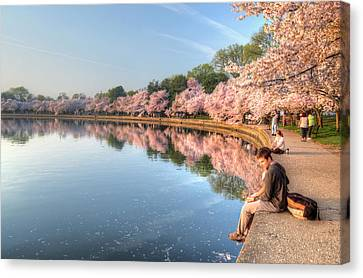 Canvas Print featuring the photograph Cherry Blossom Love by Michael Donahue
