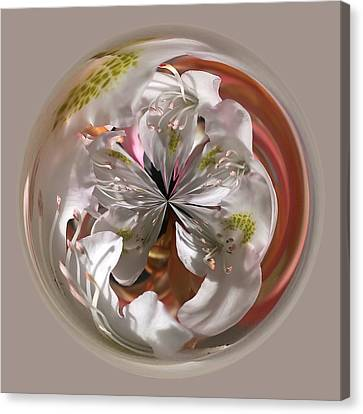 Cherry Blossom Orb Canvas Print by Don Keisling