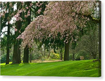 Canvas Print featuring the photograph Cherry Blossom by Sabine Edrissi