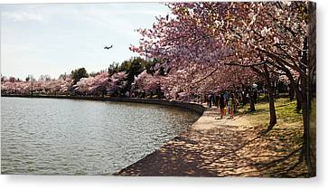 Cherry Tree Canvas Print - Cherry Blossom Trees At Tidal Basin by Panoramic Images