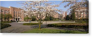 Cherry Blossom Trees In A University Canvas Print by Panoramic Images