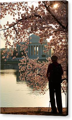 Metro Canvas Print - Cherry Blossoms 2013 - 005 by Metro DC Photography