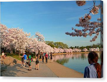 Cherry Blossoms 2013 - 020 Canvas Print by Metro DC Photography