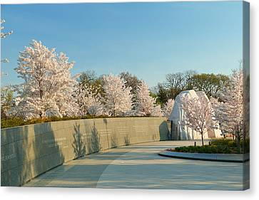Cherry Blossoms 2013 - 022 Canvas Print by Metro DC Photography