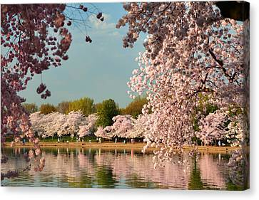 Cherry Blossoms Canvas Print - Cherry Blossoms 2013 - 023 by Metro DC Photography