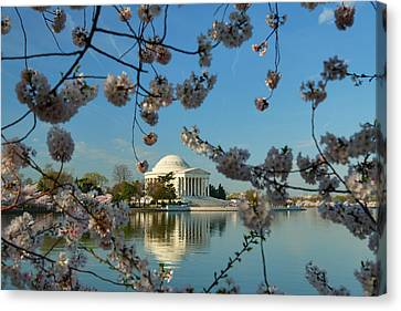 Cherry Blossoms 2013 - 039 Canvas Print by Metro DC Photography