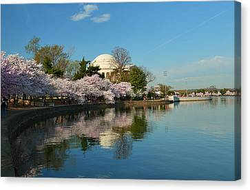 Cherry Blossoms 2013 - 041 Canvas Print by Metro DC Photography