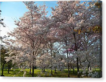 Cherry Blossoms 2013 - 049 Canvas Print by Metro DC Photography