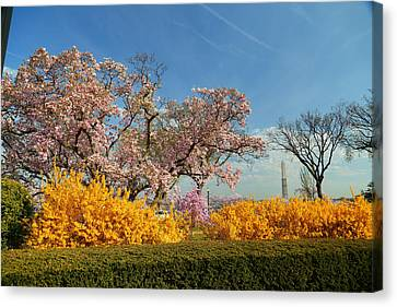 Washington Monument Canvas Print - Cherry Blossoms 2013 - 050 by Metro DC Photography