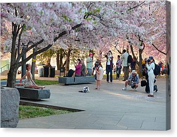 Cherry Blossoms 2013 - 069 Canvas Print by Metro DC Photography