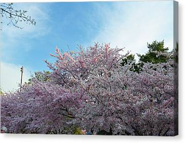 Metro Canvas Print - Cherry Blossoms 2013 - 070 by Metro DC Photography