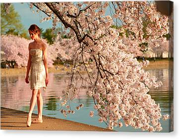 Cherry Trees Canvas Print - Cherry Blossoms 2013 - 079 by Metro DC Photography