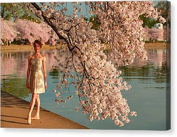 Cherry Blossoms 2013 - 081 Canvas Print by Metro DC Photography