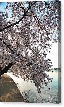 Memorial Canvas Print - Cherry Blossoms 2013 - 092 by Metro DC Photography