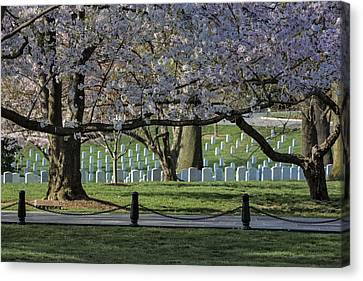 Cherry Blossoms Adorn Arlington National Cemetery Canvas Print by Susan Candelario