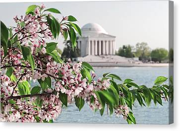 Canvas Print featuring the photograph Cherry Blossoms And The Jefferson Memorial 2 by Mitchell R Grosky