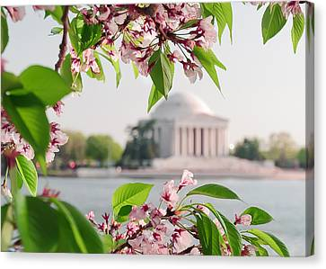 Canvas Print featuring the photograph Cherry Blossoms And The Jefferson Memorial by Mitchell R Grosky
