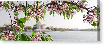 Canvas Print featuring the photograph Cherry Blossoms And The Jefferson Memorial Panorama by Mitchell R Grosky