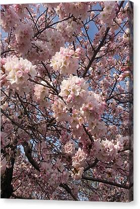 Cherry Blossoms For Lana Canvas Print