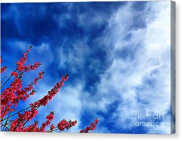 Cherry Blossoms To The Sky Canvas Print by John Kreiter