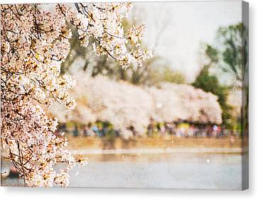 Canvas Print featuring the photograph Cherry Blossoms In Washington Dc by Vizual Studio