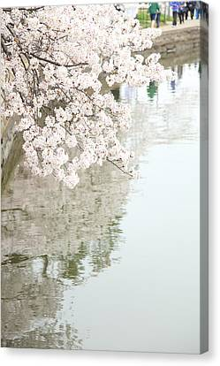 Cherry Blossoms - Washington Dc - 0113105 Canvas Print by DC Photographer