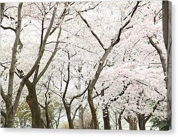 Decor Canvas Print - Cherry Blossoms - Washington Dc - 0113111 by DC Photographer