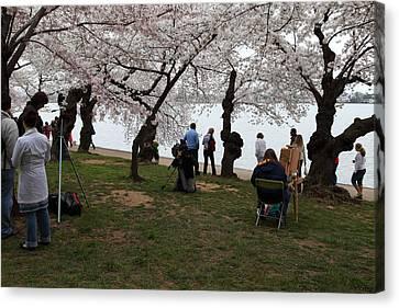 Cherry Blossoms - Washington Dc - 0113132 Canvas Print by DC Photographer