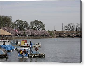 Cherry Blossoms - Washington Dc - 011327 Canvas Print by DC Photographer