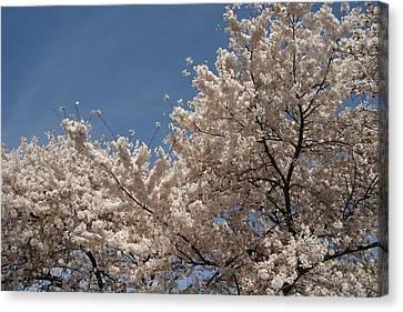 Japan Canvas Print - Cherry Blossoms - Washington Dc - 011337 by DC Photographer