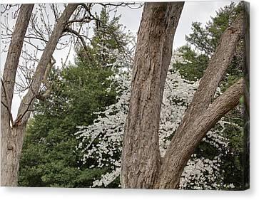 Monuments Canvas Print - Cherry Blossoms - Washington Dc - 011352 by DC Photographer